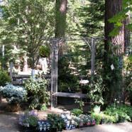 Arbor Plants