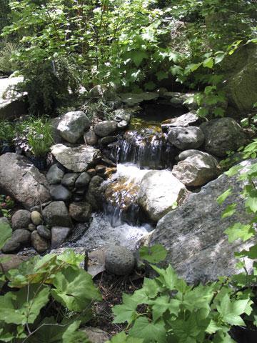 waterpond